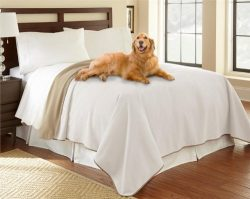 100% Waterproof Mambe Furniture Cover for Pets and People (Twin/Loveseat 70″x 90″, B ...